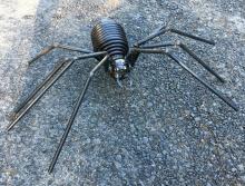 Medium Spring Spider